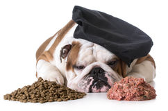 Dog food debate - kibble or raw Royalty Free Stock Photo