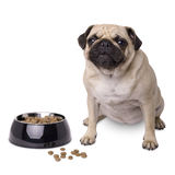 Dog with food dish Royalty Free Stock Photography