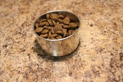 Dog food in a dog`s own cup stock images