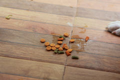 Dog food on the ground Royalty Free Stock Photo