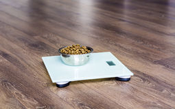 dog food on a  weigh scales.Animal health Royalty Free Stock Images
