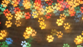 Dog foot bokeh light as background. Colorfull bokeh. stock footage