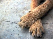 Dog foot on floor Stock Photos