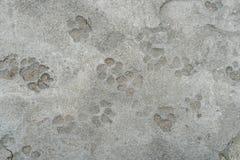 Dog foot print Royalty Free Stock Photo