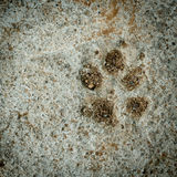 Dog foot print Stock Images