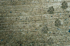 Dog foot print. On concrete floor Stock Images