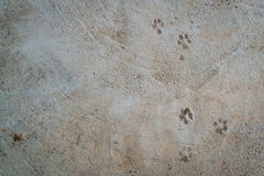 Dog foot print. On concrete floor Royalty Free Stock Image