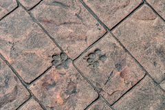 Dog foot print. On concrete floor Royalty Free Stock Images