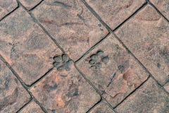 Dog foot print Royalty Free Stock Images