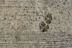 Dog foot print. On concrete floor Royalty Free Stock Photos