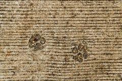 Dog foot print. On concrete floor Stock Photo