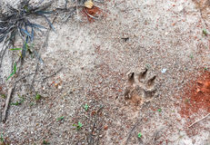 Dog foot print. On the graval sand Royalty Free Stock Images