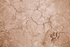 Dog foot print on ground. For background used Royalty Free Stock Photo
