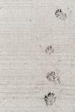 Dog foot print. Stock Photo