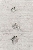 Dog foot print. Stock Image
