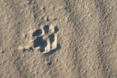 Dog foot print in the sand Stock Photography