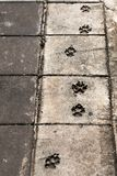 Dog foot prints on pavement. Stock Photos
