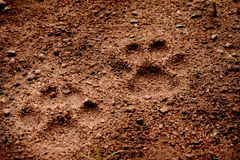 Dog foot tread on soft soil ground Royalty Free Stock Photography