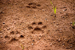 Dog foot tread on soft soil ground Stock Photo