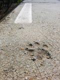 Dog Footprint Stock Image