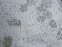 It is dog footprint Royalty Free Stock Photos