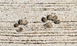 Dog footprint. Stock Photos