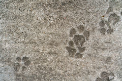 Dog footprint on cement Royalty Free Stock Photos