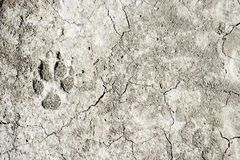 Dog footprint on earth royalty free stock images