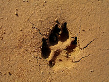 Dog Footprint on Sand Stock Photos