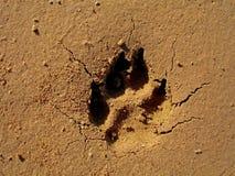 Dog Footprint on Sand. Dog's footprint on sand, cracks radiating in every direction Stock Photos
