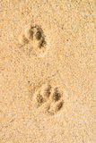 Dog footprint on the sand beach Stock Images