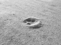 Dog footprint on the sand royalty free stock photos