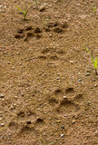 Dog footprint on soft ground Stock Photos