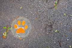 Dog Footprint step by step on the ground royalty free stock images
