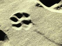 Dog footprint Stock Photos