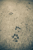Dog footprints Royalty Free Stock Photos