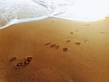 Dog footprints on the beach.  Concept of friendship and companionship. Dog footprints beach concept friendship companionship royalty free stock photos