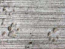 Dog footprints royalty free stock photos