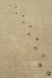Dog footprints Royalty Free Stock Photo