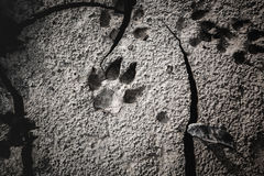 Dog footprints at the cracked ground. Stock Photography