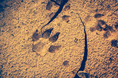 Dog footprints at the cracked ground. Vintage effect tone. Royalty Free Stock Image