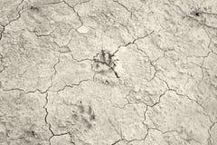 Dog footprints cracks Royalty Free Stock Image