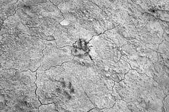 Dog footprints cracks Stock Photography