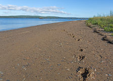 Dog footprints on gravelly beach Royalty Free Stock Photo