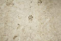 Dog footprints land Stock Image