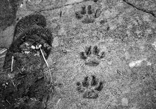Dog footprints land Stock Photography