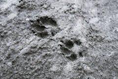 Dog footprints Stock Images