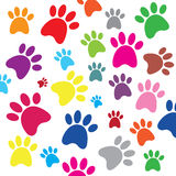 Dog footprints Stock Image