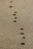Dog footprints Royalty Free Stock Image