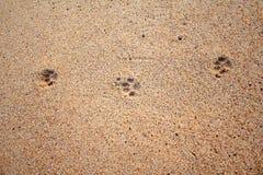 Dog footprints Stock Image